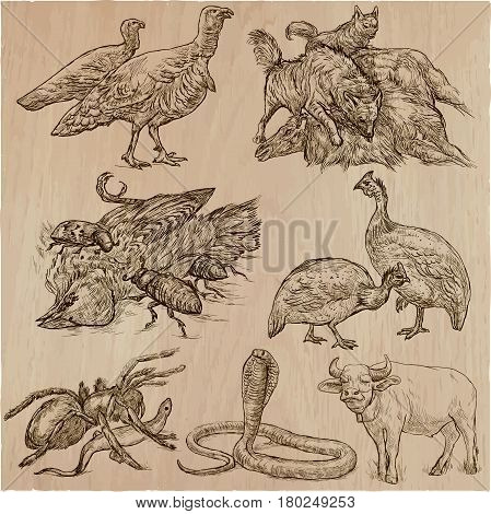 Animals around the World. Collection of an hand drawn vector illustrations. Freehand sketches. Line art. Each drawing comprise of a few layers of lines. Colored background is isolated. Easy editable.