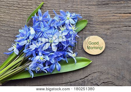 Good Morning or Spring concept with blue first spring flowers.Bouquet of blue snowdrops.Blue Scilla flowers (Scilla siberica,Squill) on old wooden background.Selective focus.