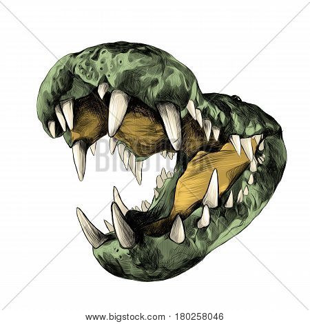 open the jaws of a crocodile with big teeth close up sketch vector graphics color picture
