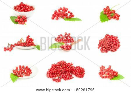Set of bunch of red berries- guelder rose on a white background