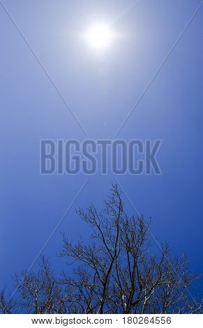 The Sun Is In The Sky. The Branches Of The Poplar Against The Blue Sky. Spring View Of A Silver Popl