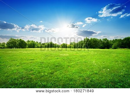Green grass with flowers and trees in spring