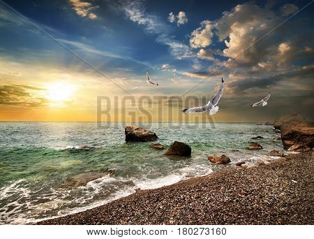 Seagull over the sea in the mountains