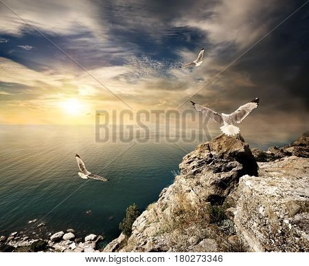 Three seagulls over the sea and mountains at sunset