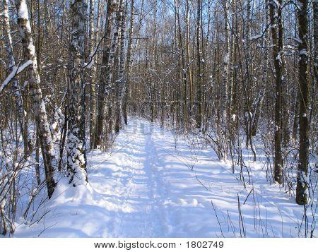 Footpath In A Winter Wood