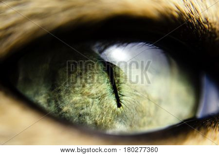 Macro close-up view of green cat eye