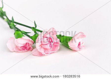 Three pink carnations bouquet on white background mother's day card