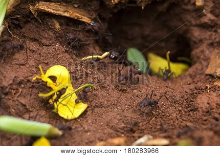 Ants in the nest. Nature of ants.
