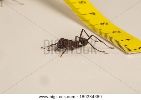 Worker ant on white background. Nature of ants.