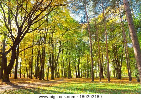 Sunlit Foliage Forest Landscape