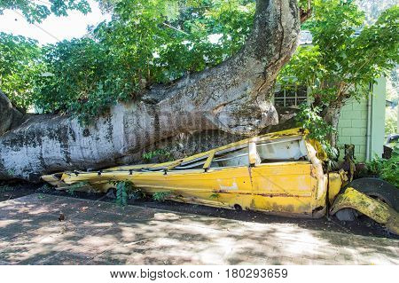 School Bus Crushed by Tree Downed by Hurricane