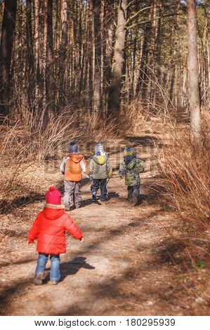 Group of four little kids running in the forest. Early spring pine forest hike in waldorf kindergarten.