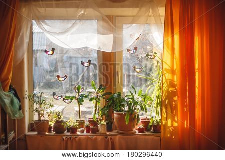 Sunlight from outside window streams into a room thick yellow curtains and white tulle. Plants and trees on a windowsill and spring DIY colorful paper birds on a window in waldorf kindergarten
