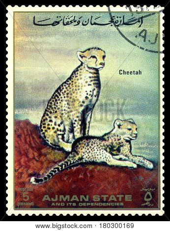 STAVROPOL RUSSIA - April 05 2017: A stamp printed in Ajman shows Cheetah (Acinonyx jubatus) circa 1967