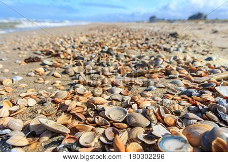 beautiful shell covered beach on sunny day
