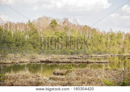 swamp in the forest, sunny and warm spring