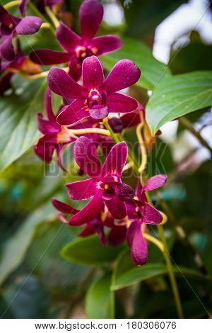 The Beautiful pink orchid on the garden