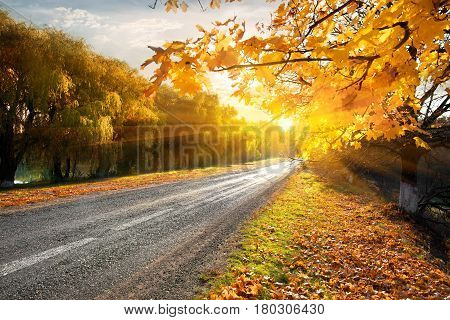 Highway through the autumn forest in sunbeams