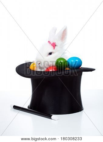 Easter bunny with colorful eggs in a magician hat sitting peacefully - isolated on white