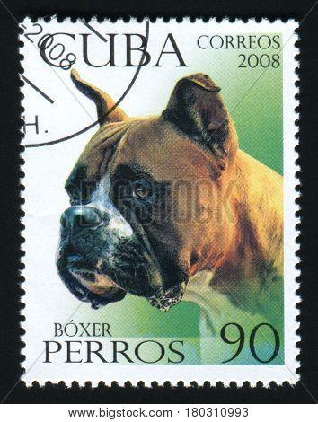 CUBA - CIRCA 2008: A post stamp printed in Cuba shows image of a Boxer, circa 2008