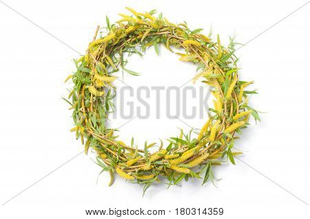 Wreath of weeping willow on white background