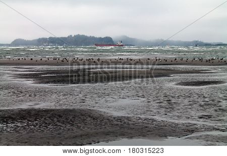 Beach at Low Tide with Seagulls and Red Freighter in the background