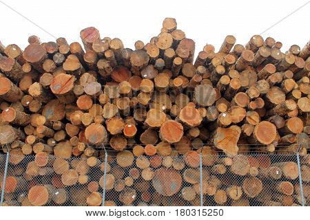 Logs Piled High Behind a Chain Link Fence with Barbed Wire