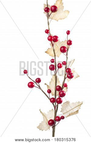 Christmas decoration with red berries and autumn leafs on white background