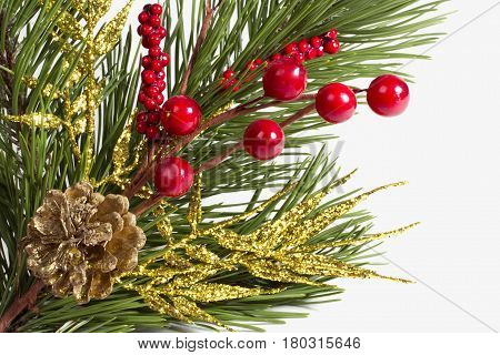 Chtismas decoration with scpuce, berries and twig in white background