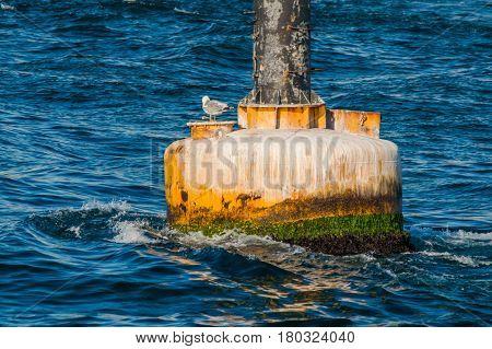 Seagull on a dirty yellow buoy in wavy Mediterranean sea