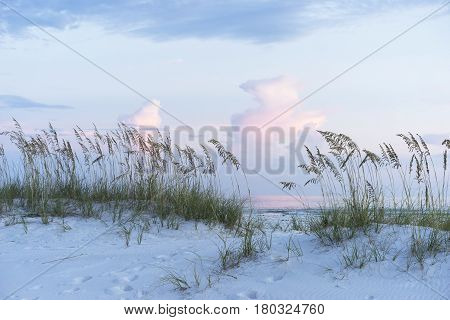 Soft muted blues and pinks adorn a pristine Florida beach at sunset complete with white sand dunes and sea oats.