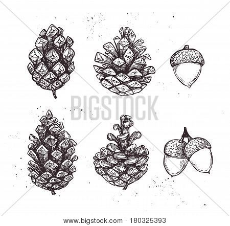 Hand Drawn Vector Illustrations. Collection Of Pine Cones And Acorns. Forest Vintage Elements. Perfe