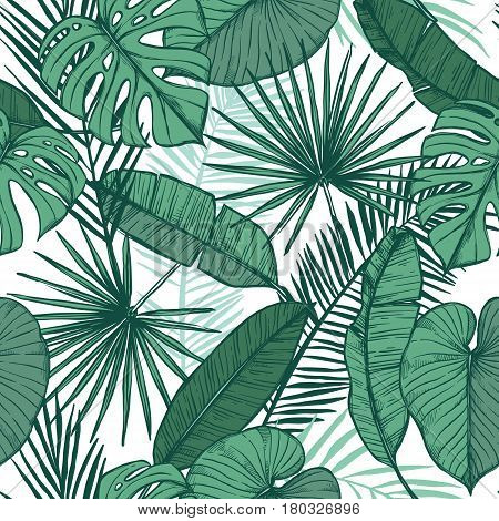 Hand Drawn Vector Background - Palm Leaves (monstera, Areca Palm, Fan Palm, Banana Leaves). Tropical