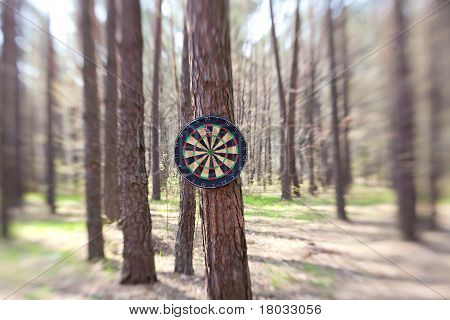 Darts Boards On The Tree In Forest