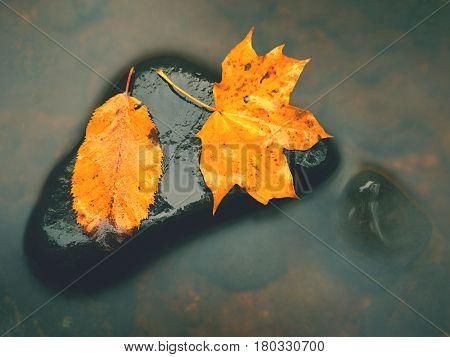 . Rotten Yellow Orange Dotted Maple Leaf In Cold Water Of Mountain Stream.