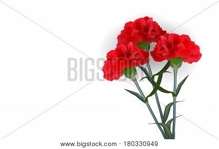 Realistic red flower carnation isolated white background. Soft shadow material sryle. Vector illustration floral plant template.