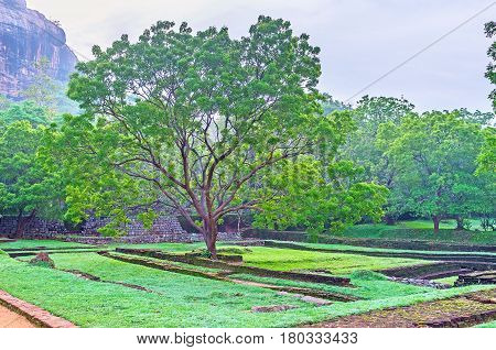 The Garden Among Sigiriya Ruins