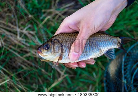 hobby fishing caught a carp in the hand of man