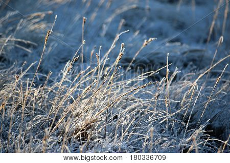Frost and snow on grass in winter