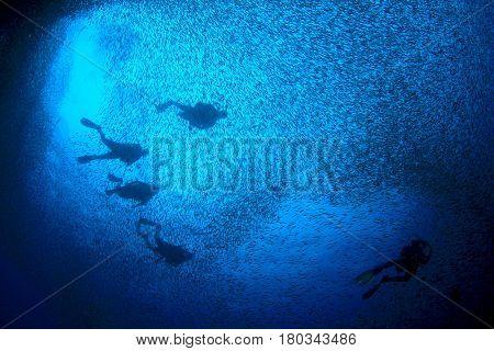 Scuba divers swim though sardines fish shoal