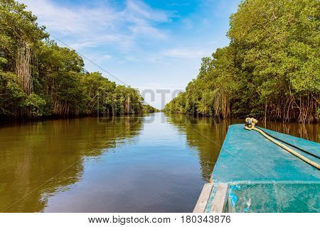 Caroni river swamp dense tropical climate mangrove forest in Trinidad and Tobago