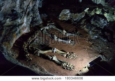 ALUSHTA, RUSSIA - MAY 21, 2016: The skeleton of a baby mammoth lying in the karst cave of Emine Bair Hosar in Chatyr-Dah mountain in Crimea.