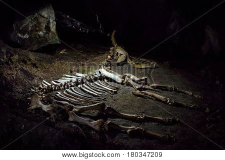 ALUSHTA, CRIMEA - MAY 21, 2016: The skeleton of a prehistoric animal lying in the karst cave of Emine Bair Hosar in Chatyr-Dah mountain.