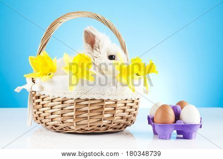 Cute Easter Bunny sitting in a wicker baske