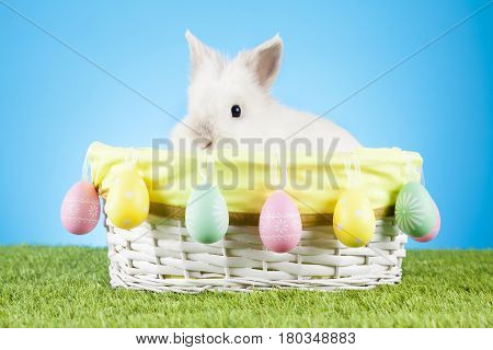 Cute white Easter bunny with colored eggs