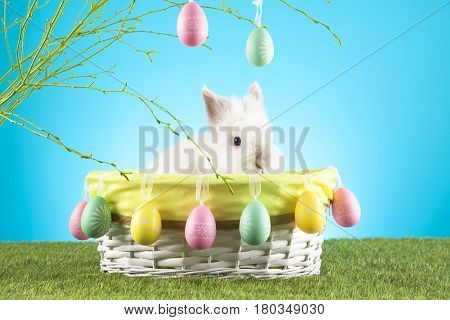 Cute Easter Bunny sitting in a wicker basket decorated with Easter eggs with green twigs in the background