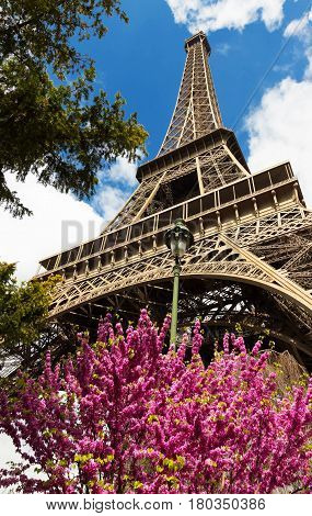 Springtime in Paris. Blossoming trees and Eiffel tower.