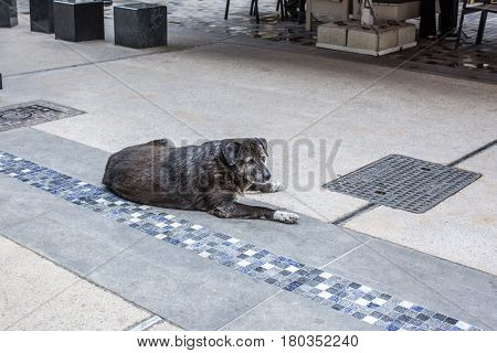 A homeless sad gray faced dog lies in the street of Thessaloniki near a cafe and waits for food