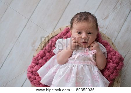 Alert ten day old newborn baby girl lying in a wooden bowl. She is wearing a frilly white and pink dress. Shot in the studio on a light wood background.