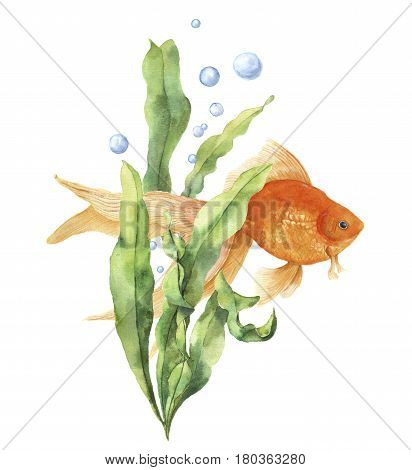 Watercolor aquarium card. Hand painted underwater print with goldfish, seaweed branch and air bubbles isolated on white background. Illustration for design, print or background